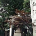 奥澤神社1