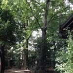 奥沢散策6