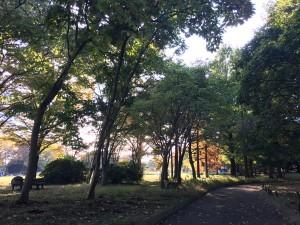 神奈川県立相模原公園3