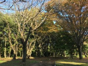 神奈川県立相模原公園2
