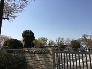 国リハ桜2018 1